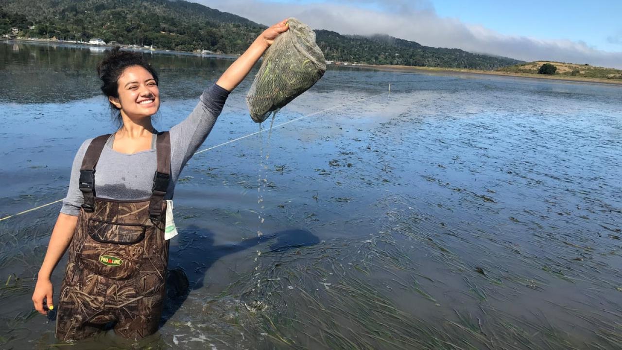 Nayeli Echeverria Collecting sea grass samples. PC: Isabelle Neylan