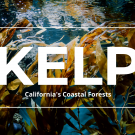 Kelp: California's Coastal Forests