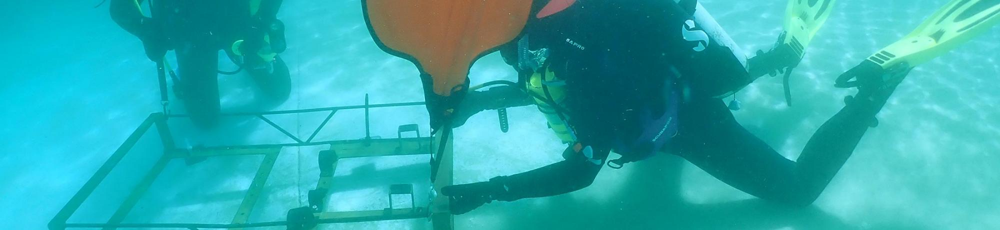 research diving course